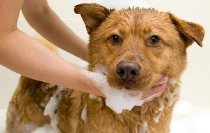 146067791-how-to-dog-bath-632x475