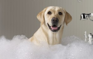 lab-in-bath1